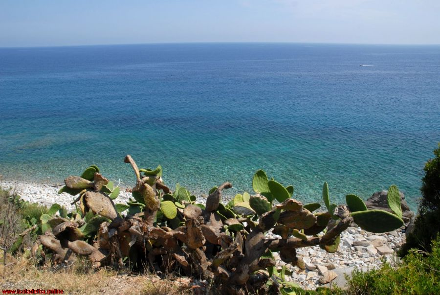 Isola d'Elba. Herbal trekking a Schiopparello