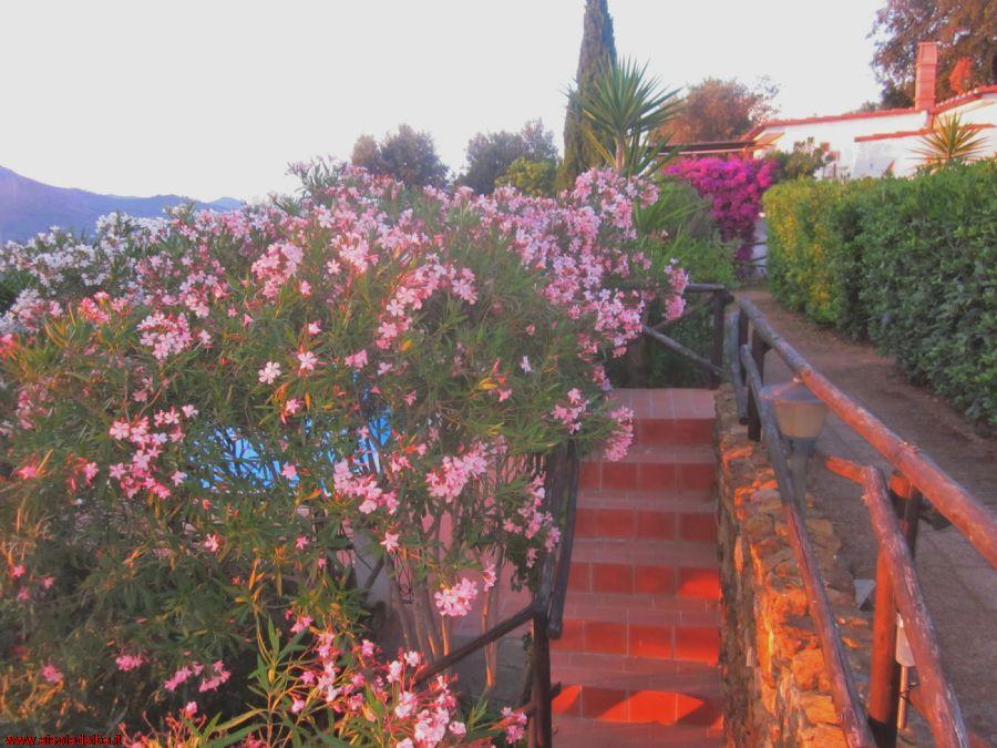 Last Second dal 26/06 OFFERTE! CON SCONTO del - 30% DAL PREVENTIVO ON LINE E SCONTO Traghetto-20% con giardino panoramico immerso nel verde